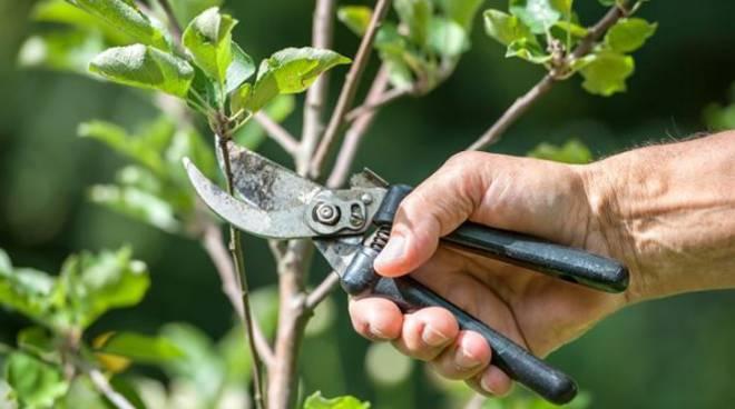 Immagine Notizia Lavori di pulizia e taglio piante zona elettrodotto Via San Bernardino-Villa