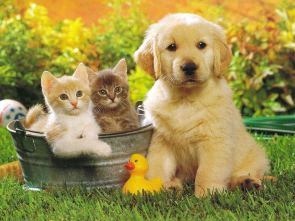 Immagine Notizia Coronavirus e Animali domestici